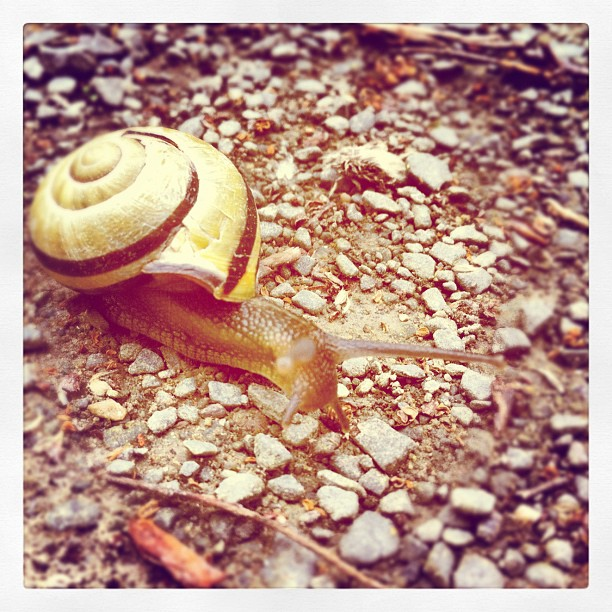 Attack of the braineating Killersnail! #snail#shell#snailshell#snailhouse#nature...