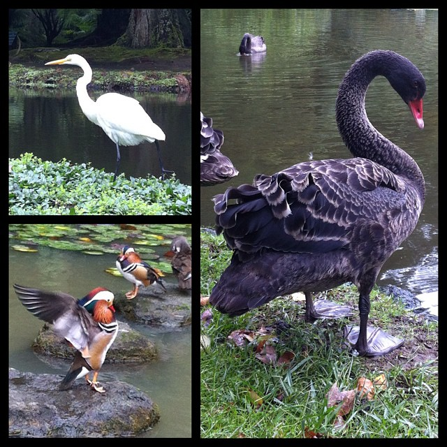 Birdwatching on the Azores!  #azores#açores #birds#birding#birdwatching#heron#sw...