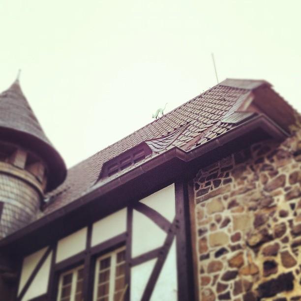 Cat on the roof #castle#cat#fortress #roof#rooftop#bonn#burglede#cat...