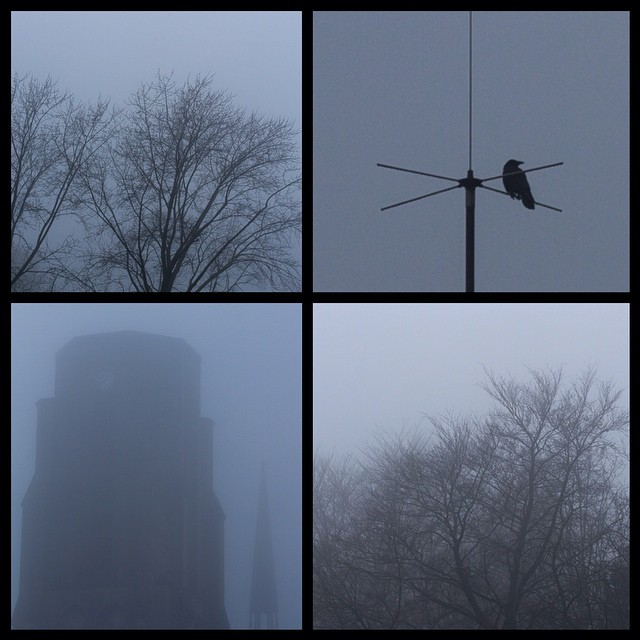 FOG You! #tree#deadtree#winter#crow#gothic#gothicchurch#fog#thefog#nebeldesgraue...