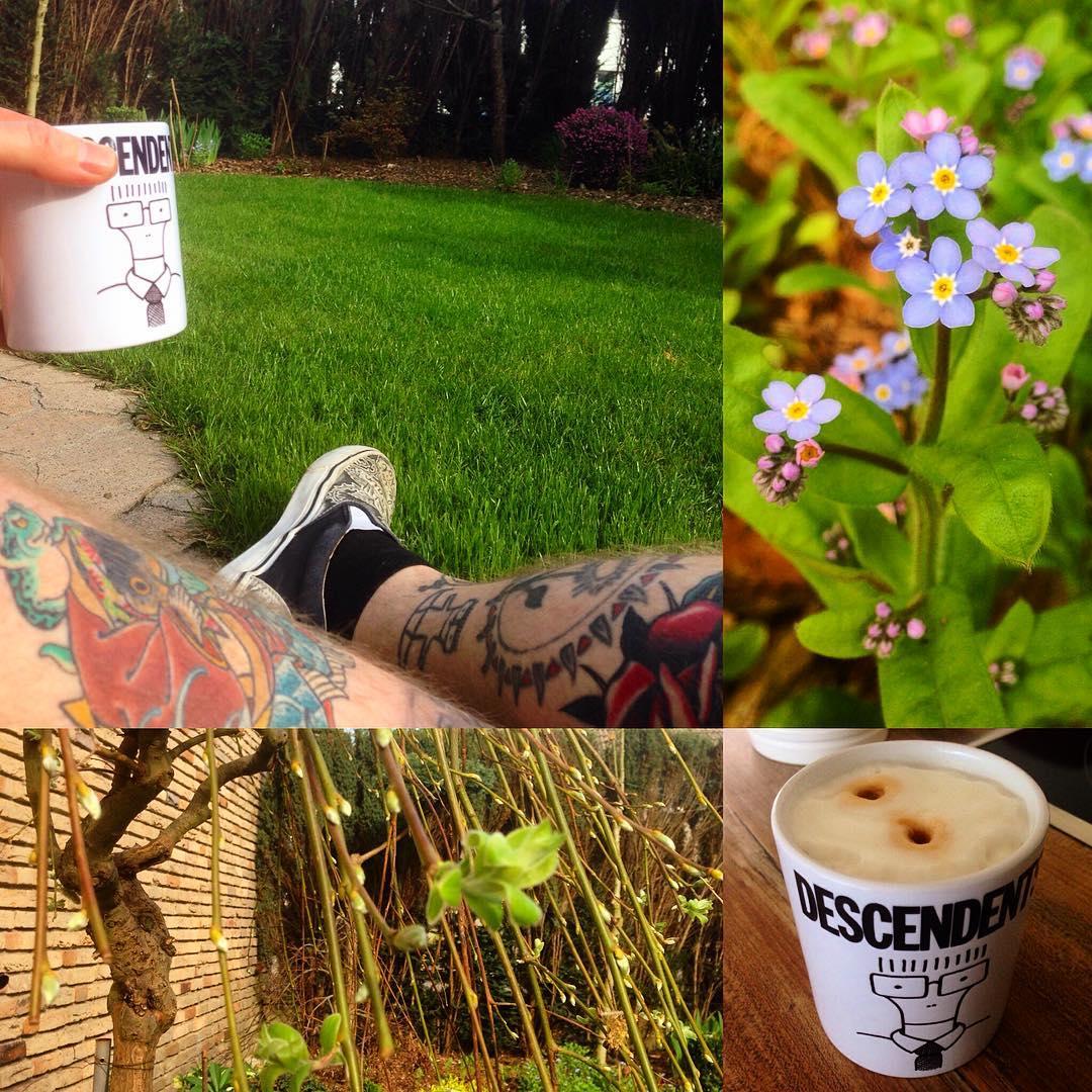 Friday morning...suburban home.   #descendents#coffee#coffeemug#garden#gardenvar...