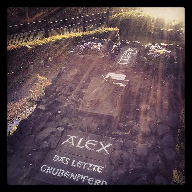 God bless Alex! #alex#grubenpferd#pferd#horse#grave#statue#memorial#sun#sunshine...