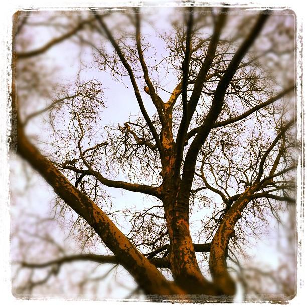 Good Morning, Ruhrpott #tree#dawn#ruhrpott#gelsenkirchen#buer#sky...