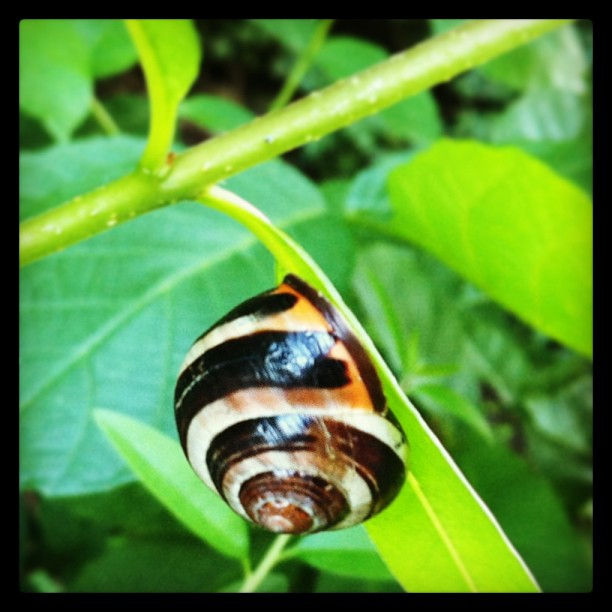 Hail the Snail #nature#outside#snail#snailhouse#shell#leaf#insect#beauty#ruhrpot...