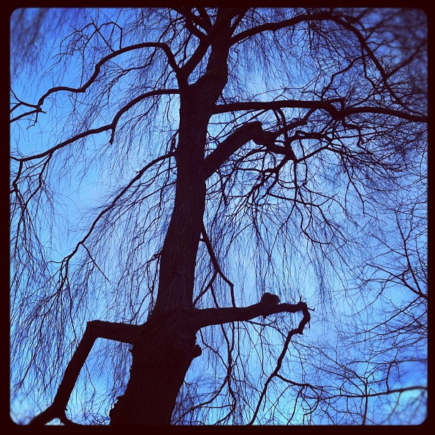 I see dead people...#tree #park #deadtree #dusk #doom #ruhrpott #winter...