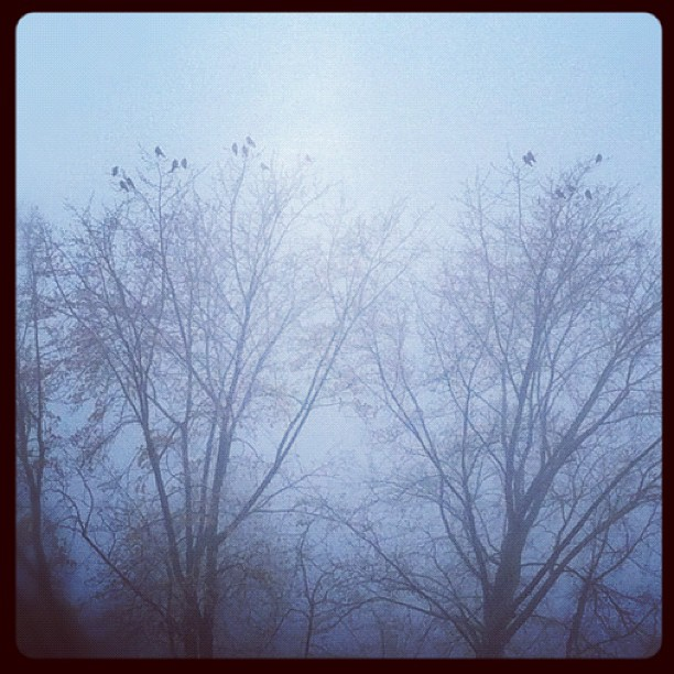 It's November again...#autumn#winter#twilight#november#sadness#cold#crow#crows#t...