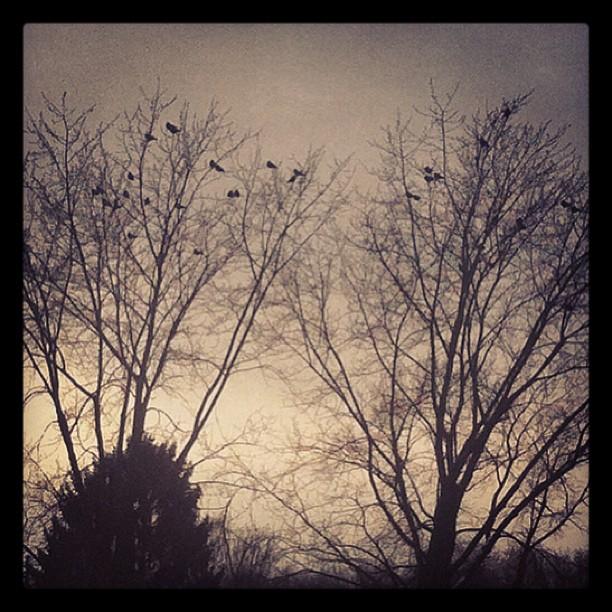 THEY watch. #birds#bird#crow#criws#magpie#thebirds#tree#trees#desdtreses#winter#...