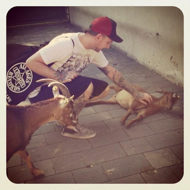 The Goat Whisperer  #goat#antlers#belly#nature#horns#pet#veganism#vegetarianism#...