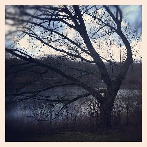 #lake#winter#tree#doom#deadtree#ruhrpott#dusk...