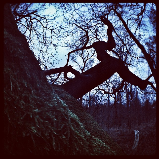 nothing beats being out in the woods... #tree#trees#forrest#woods#dark#cold#dead...