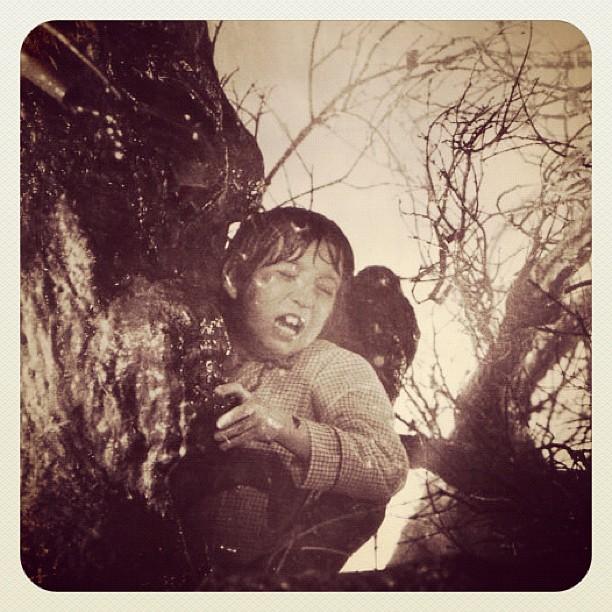 #poltergeist#tree#horror#deadtree#ghost...