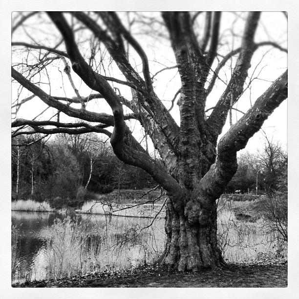 #tree#lake#park#dusk #ruhrpott #deadtree...